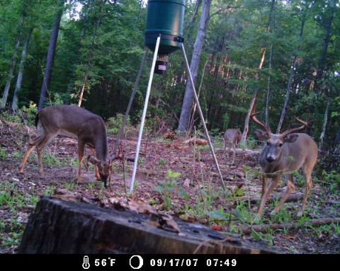 Digital Game and Trail Camera Buck Deer - Arkansas