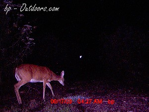 Moultrie Game Watcher - Laser Aim