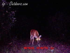 Moultrie Game Watcher - Autosense Flash