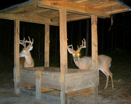 Wildlife game feeders and food plot forage - resources for supporting and managing your trophy wildlife habitat.
