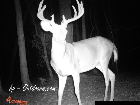 Wildgame Innovations IR5 Photos Series by bp-Outdoors.com